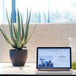 Des plantes pour son bureau